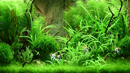 Juwel Aquarium Set Up Examples